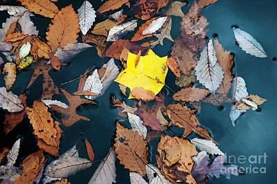 Fallen Leaves Art Print by Hideaki Sakurai