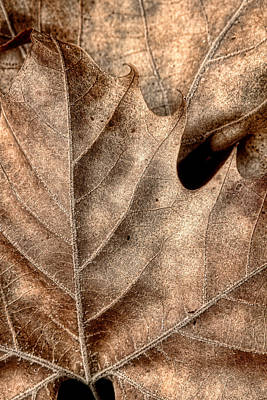 Brown Leaf Photograph - Fallen Leaves II by Tom Mc Nemar
