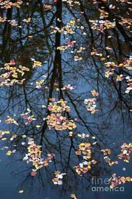 Photograph - Fallen Leaves In Autumn Lake by Benedict Heekwan Yang