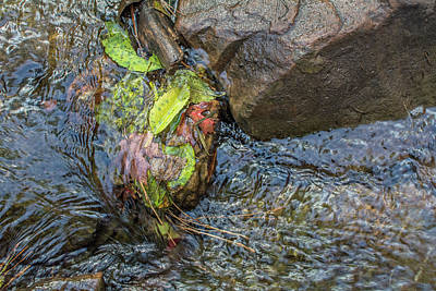 Photograph - Fallen Leaves In West Fork 8088-101817-1 by Tam Ryan