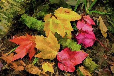 Hayrides Photograph - Fallen Leaves by Janet Ballard