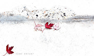 Photograph - Fallen Leaves by Kume Bryant