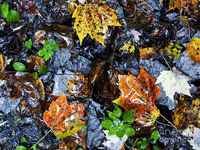 Rainy Day Photograph - Fallen Leaves On A Rainy Day by Thomas R Fletcher
