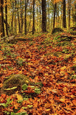 Photograph - Fallen Leaves On The Ice Age Trail by Dale Kauzlaric