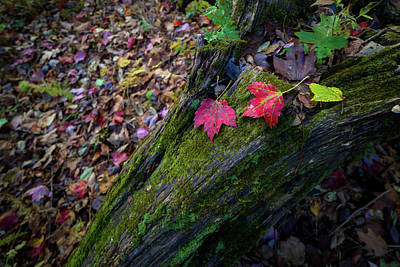 Art Print featuring the photograph Fallen Leaves On The Limberlost Trail by Lori Coleman