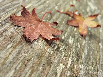 Photograph - Fallen Leaves by Peggy Hughes