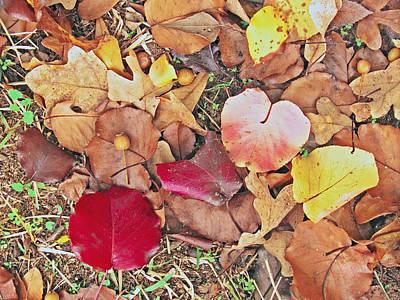Soap Suds - Fallen Leaves by Robert Brown