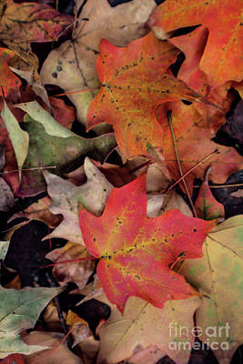 Photograph - Fallen Leaves by Sandy Moulder