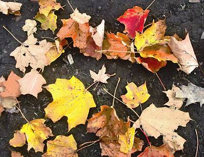 Photograph - Fallen Leaves by Stephanie Moore
