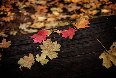 Photograph - Fallen Leaves by Teresa Wilson
