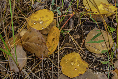 Photograph - Fallen Leaves by Tony Baca