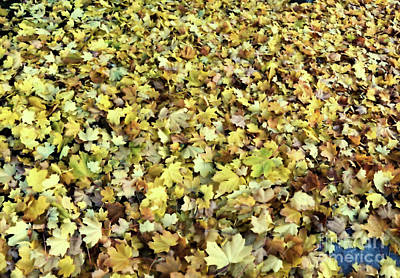 Photograph - Fallen Leaves by Victor K