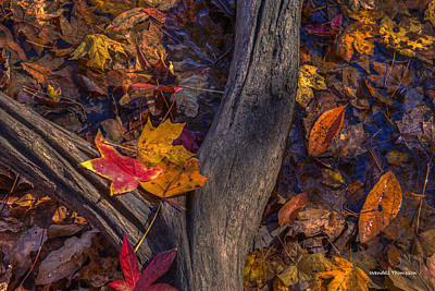 Photograph - Fallen Leaves by Wendell Thompson
