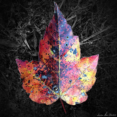 Photograph - Fallen Maple Leaf by Iowan Stone-Flowers