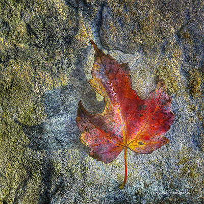 Photograph - Fallen Maple Leaf by Wendell Thompson
