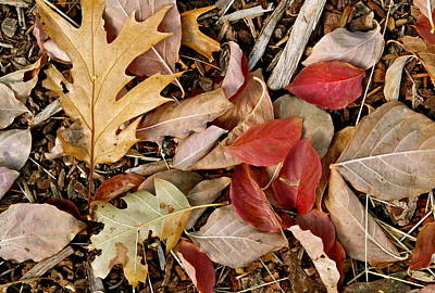 Photograph - Fallen by Michele Myers