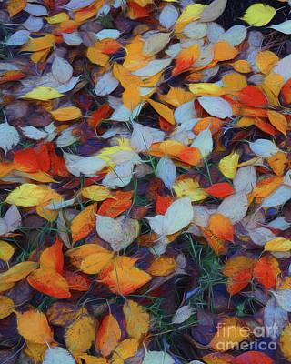 Photograph - Fallen - Natures Carpet by Scott Cameron
