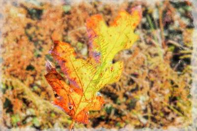 Digital Art - Fallen Oak Leaf. by Rusty R Smith