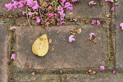 Photograph - Fallen On Brick by Sharon Popek