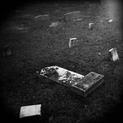Holga Toy Camera Photograph - Fallen by Paul Anderson