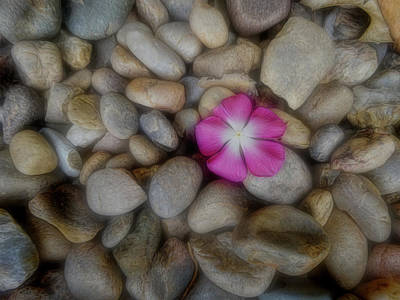 Photograph - Fallen Petals by Ann Powell