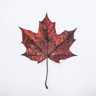 Fall Photograph - Fallen Red by Kate Morton