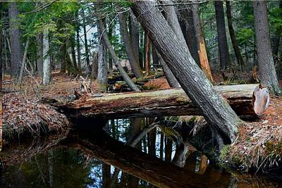 Photograph - Fallen Reflections 1 by Nina Kindred