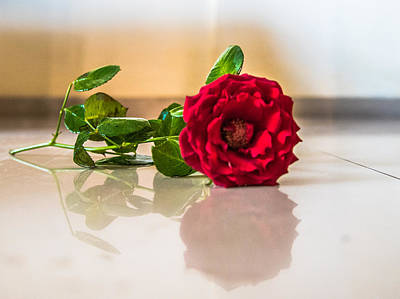 Global Design Shibori Inspired - Fallen Rose by Anupam Gupta