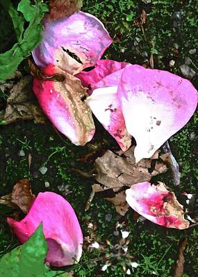 Photograph - Fallen Rose Petals by Stephanie Moore