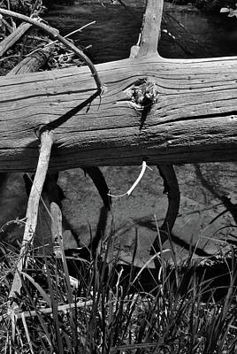 Photograph - Fallen Spruce by Ron Cline