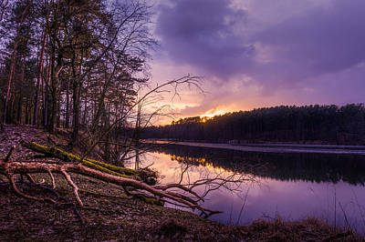 Photograph - Fallen To The Setting Sun by Dmytro Korol