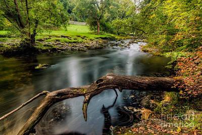 Autumn Landscape Digital Art - Fallen Tree by Adrian Evans