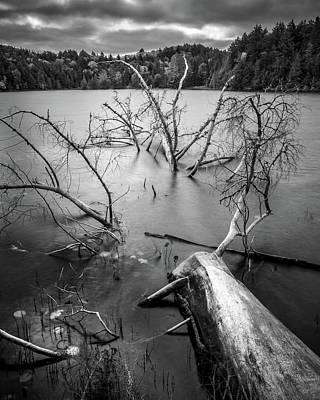 Photograph - Fallen Tree, Algonquin by Joshua Hakin