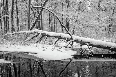 Photograph - Fallen Tree And Pond In Winter by Alexander Kunz
