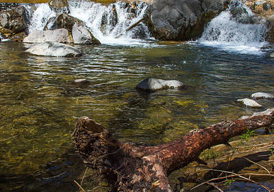 Photograph - Fallen Tree At Oak Creek by Bonnie Follett