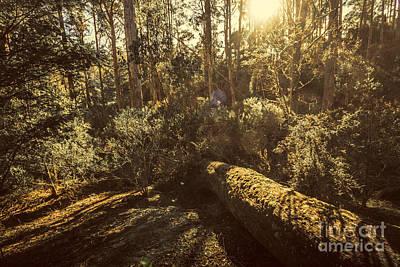 Fallen Tree In Foliage Art Print