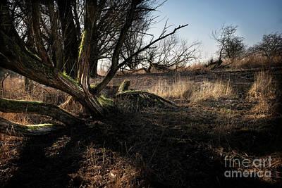 Flevoland Photograph - Fallen Tree by Joey Buhrs