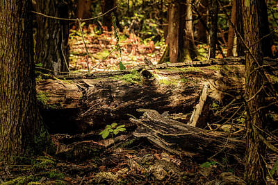 Photograph - Fallen Tree by Joni Eskridge