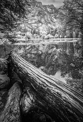 Yosemite Photograph - Fallen Tree, Mirror Lake, Yosemite National Park by Gareth Burge Photography