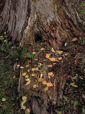 Photograph - Fallen Tree Offerings by Paul Breitkreuz
