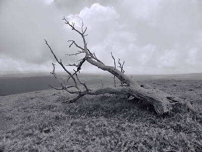 Photograph - Fallen Tree by Pamela Walton