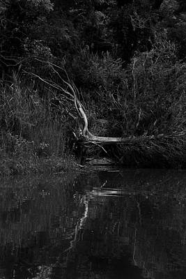 Photograph - Fallen Tree by Steve Gravano