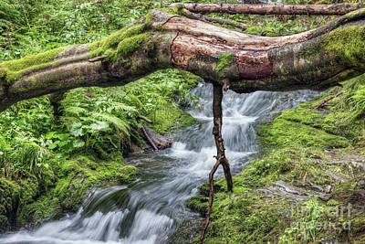 Photograph - Fallen Tree Trunk Over Stream by Michal Boubin
