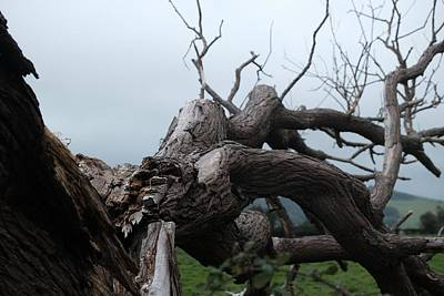 Photograph - Fallen Tree by Will Gudgeon