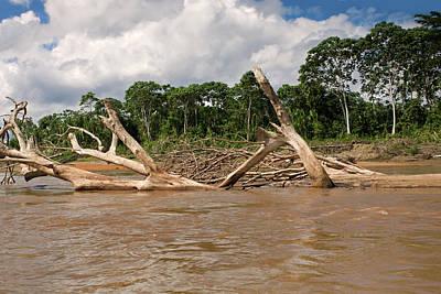 The Beatles - Fallen Trees in Boca Manu river by Aivar Mikko