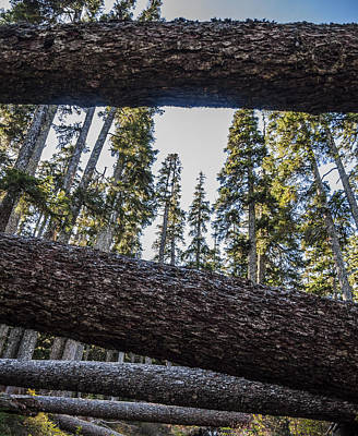 Fallen Trees Art Print