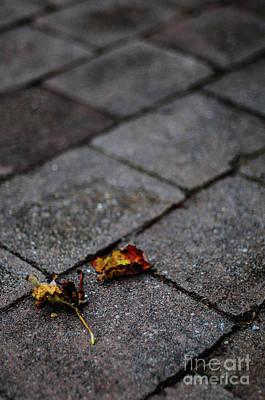 Photograph -  Fallen  by Werner Padarin