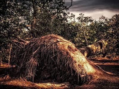Photograph - Fallen by Wim Lanclus