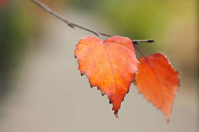 Photograph - Falling For Fall by Crystal Hoeveler