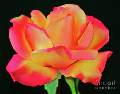 Photograph - Falling In Love by Ray Shrewsberry